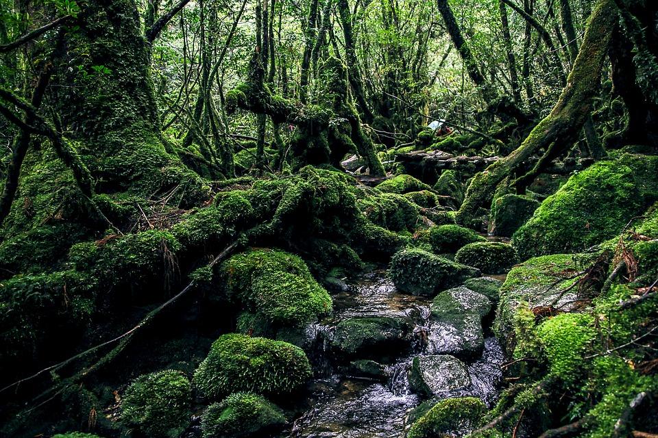 yakushima-island-2336735_960_720