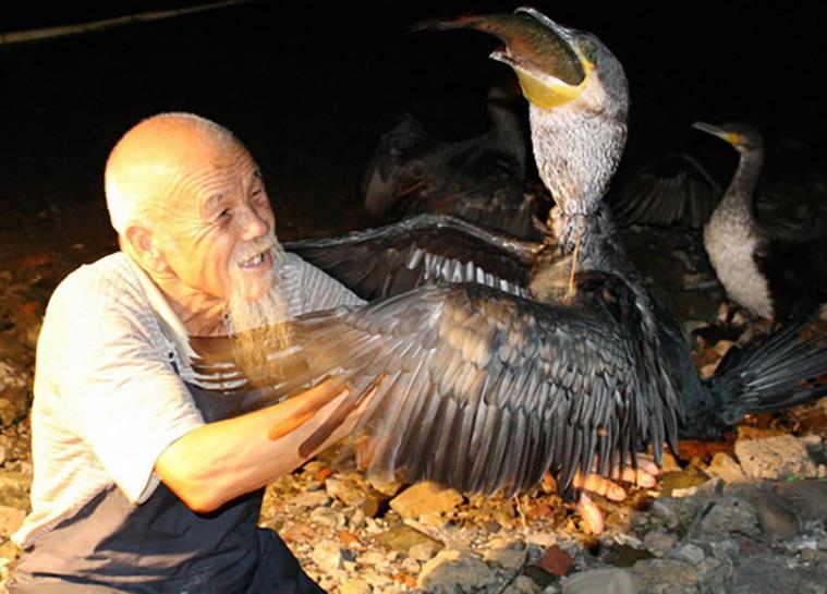 cormorant-2