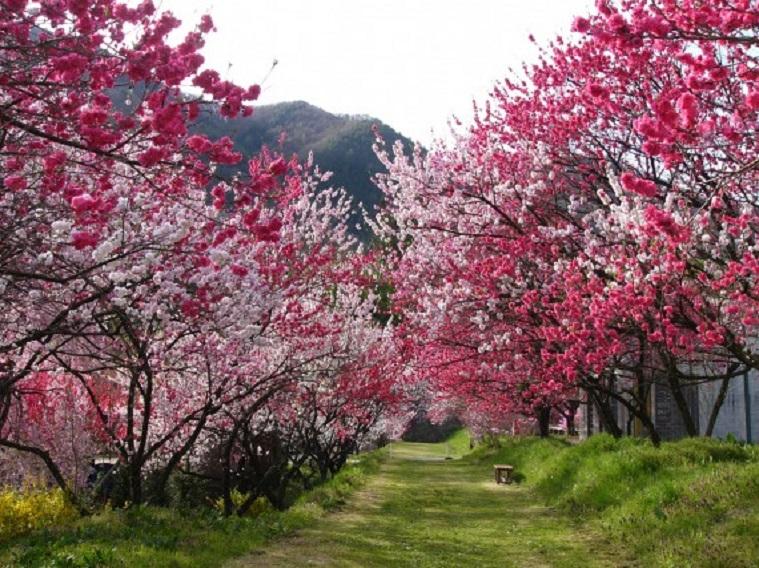 Peach-Flower-Hirugami-Hot-Spring-6-570x427