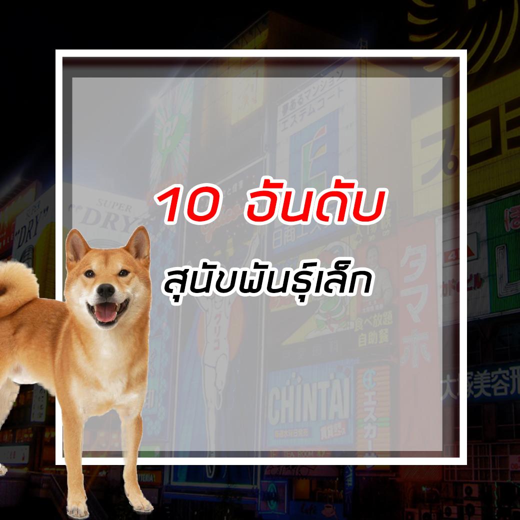 10 อันดับสุนัขพันธุ์เล็ก