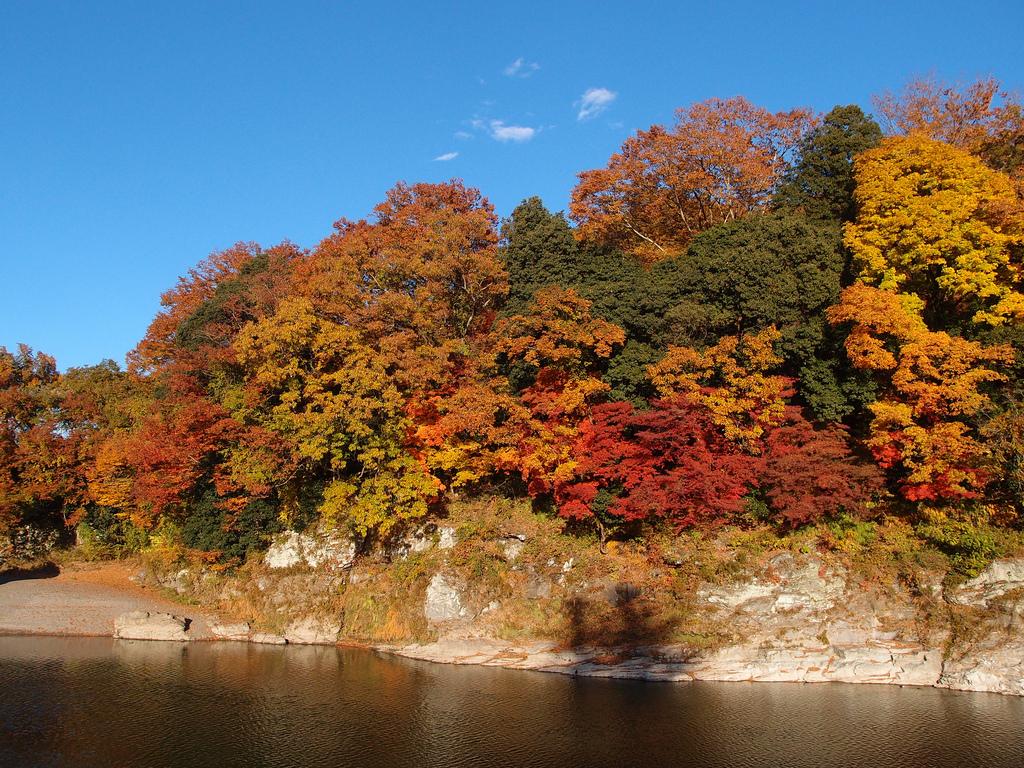 ต้นเมเปิ้ลข้างๆแม่น้ำ