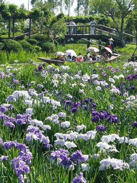 450px-Sawara-aquatic-botanical-garden,iris,katori-city,japan