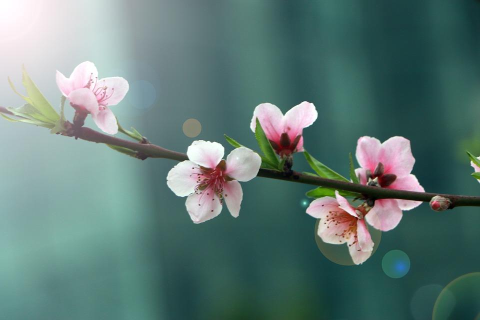 spring-2395218_960_720