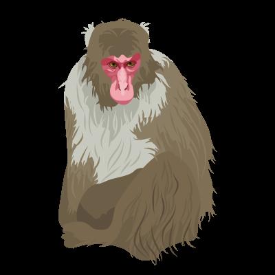 201412_Japanese_monkey