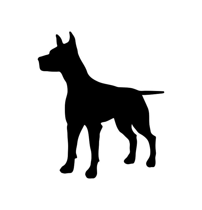 dog-2676562_960_720