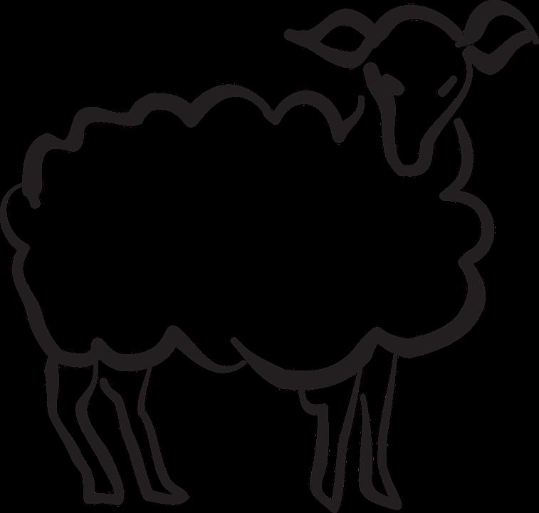lamb-44665_960_720