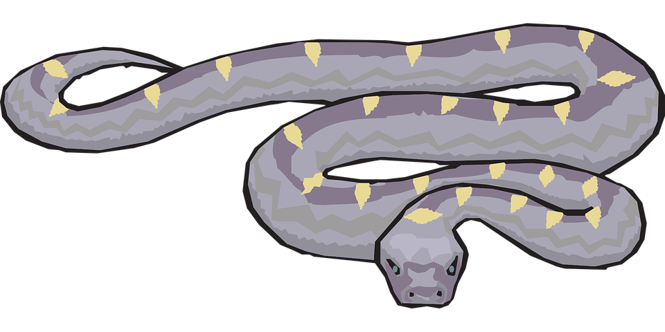 snake-46139_960_720