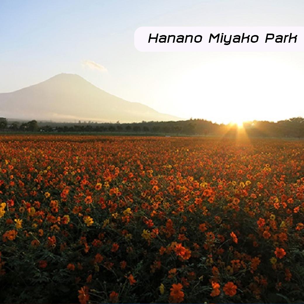 Hanano Miyako Park