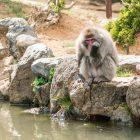 猴子公園嵐山