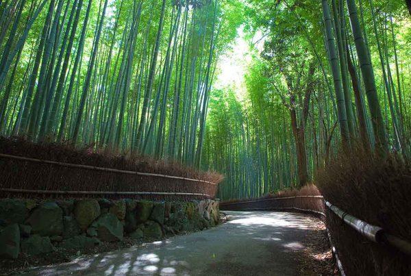 สวนป่าไผ่ซากาโนะ