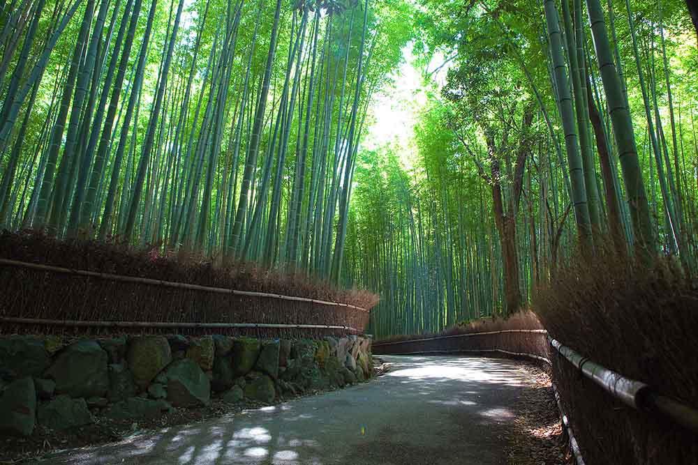 Parc forestier de bambous de Sakano